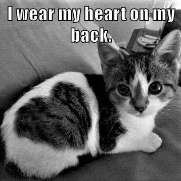 Cat - I wear my heart on my back.