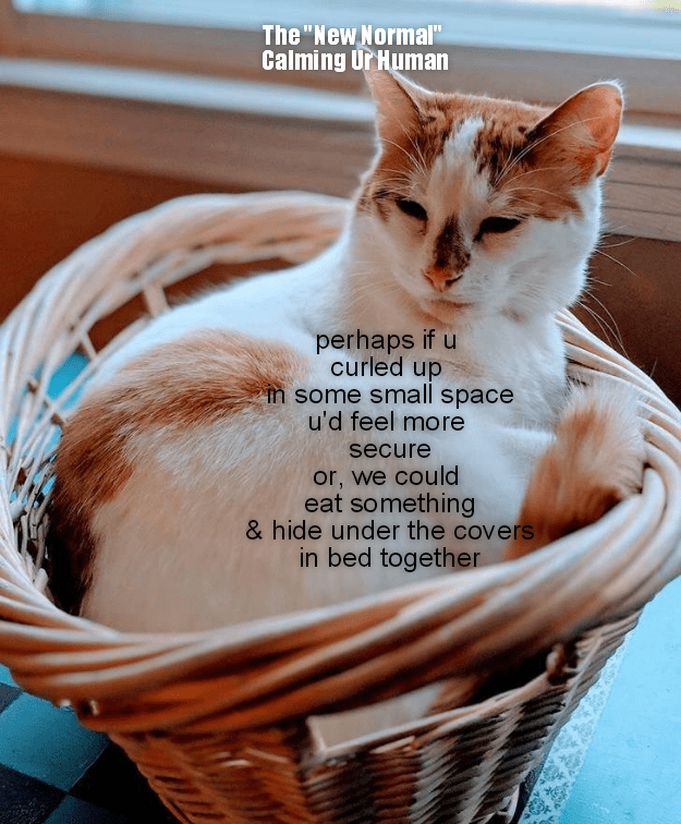 The New Normal Calming Ur Human Lolcats Lol Cat Memes