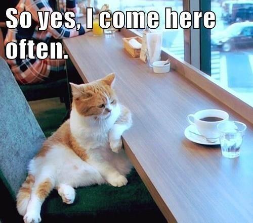 Cat - So ves, I come here often.