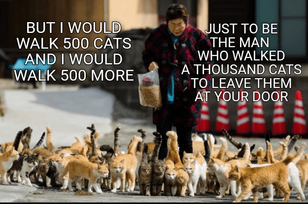 Cat - Canidae - BUT I WOULD WALK 500 CATS AND I WOULD WALK 500 MORE JUST TO BE THE MAN WHO WALKED A THOUSAND CATS TO LEAVE THEM AT YOUR DOOR