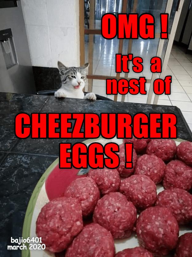 Cat - Food - OMG! It's a nest of CHEEZBURGER EGGS bajio6401 march 202O