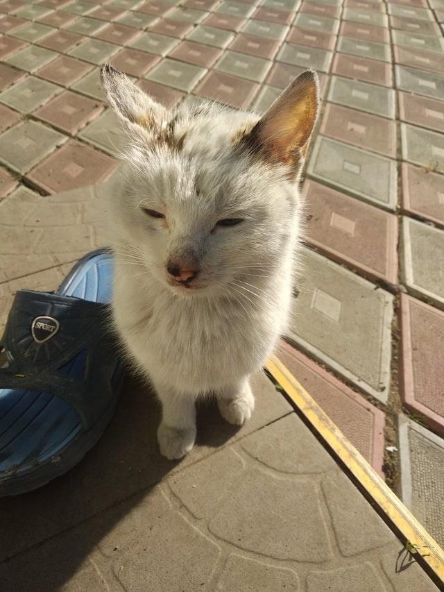 Cat - SPORT