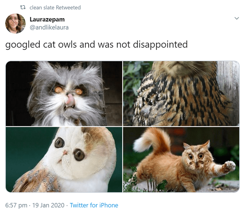 Cat - t2 clean slate Retweeted Laurazepam @andlikelaura googled cat owls and was not disappointed 6:57 pm · 19 Jan 2020 · Twitter for iPhone