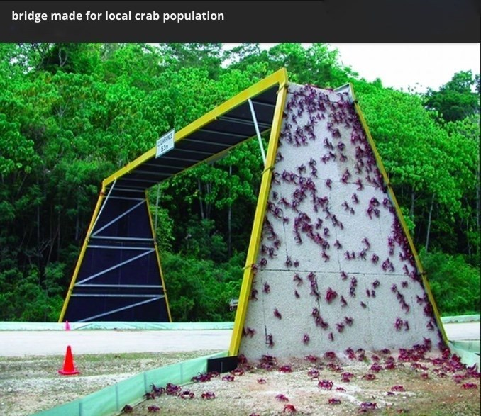 Green - bridge made for local crab population