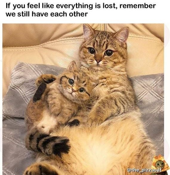 Cat - If you feel like everything is lost, remember we still have each other @the pizzacat