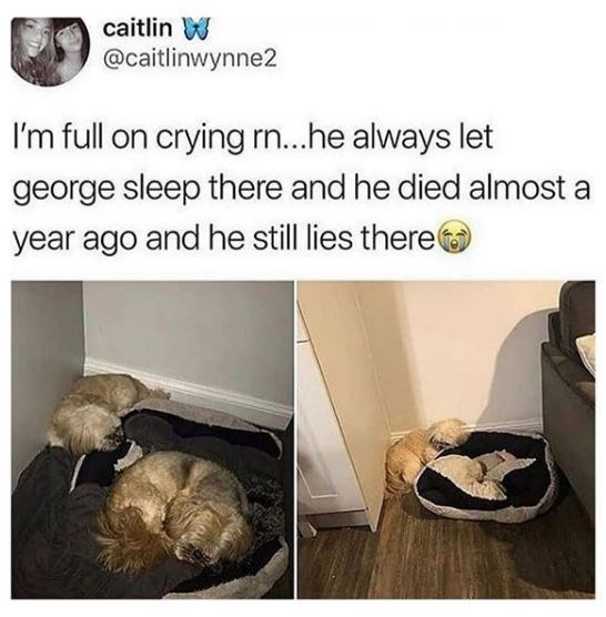 Organism - caitlin W @caitlinwynne2 I'm full on crying rn...he always let george sleep there and he died almost a year ago and he still lies there