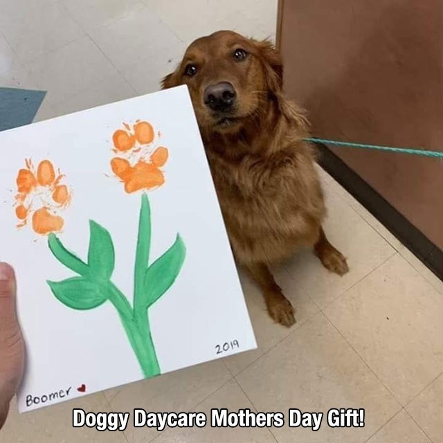 Dog - 2019 Boomer Doggy Daycare Mothers Day Gift!