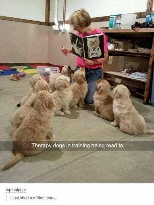 Dog - COOD DOG Therapy dogs in training being read to topthatpop : |I just shed a million tears.
