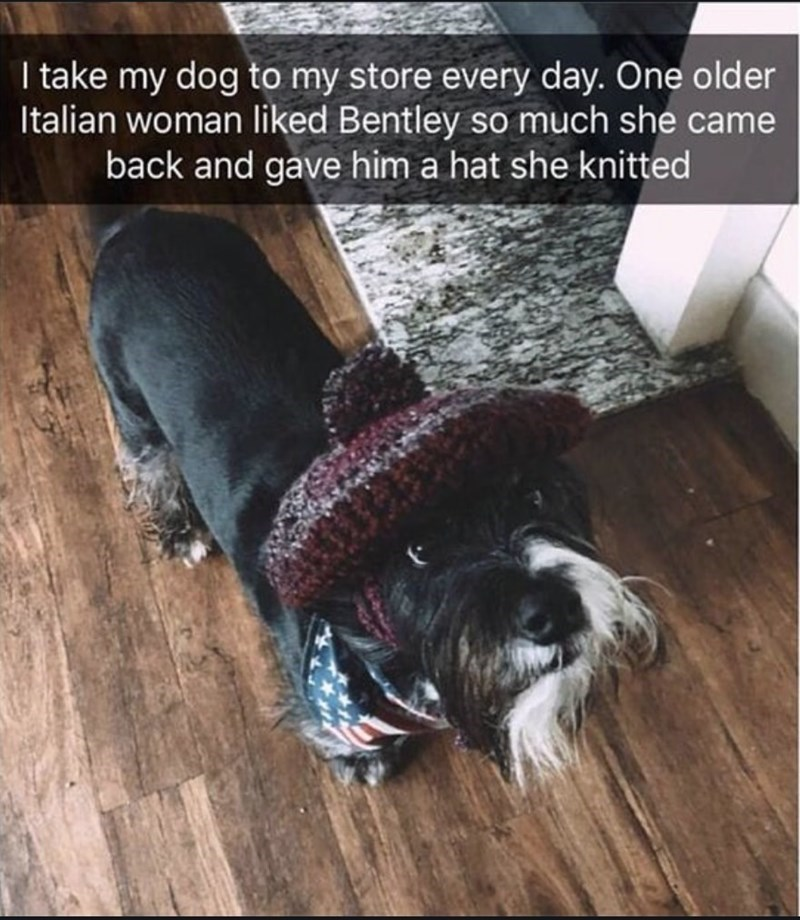 Dog - I take my dog to my store every day. One older Italian woman liked Bentley so much she came back and gave him a hat she knitted