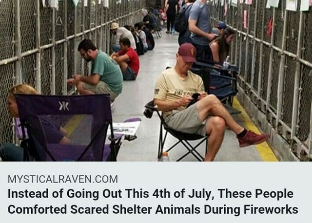 Human - Ж MYSTICALRAVEN.COM Instead of Going Out This 4th of July, These People Comforted Scared Shelter Animals During Fireworks
