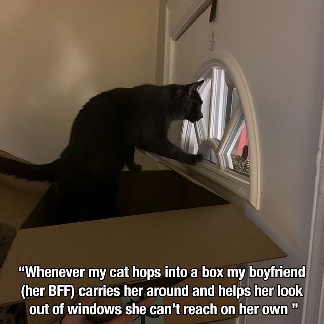 """Cat - """"Whenever my cat hops into a box my boyfriend (her BFF) carries her around and helps her look out of windows she can't reach on her own """""""