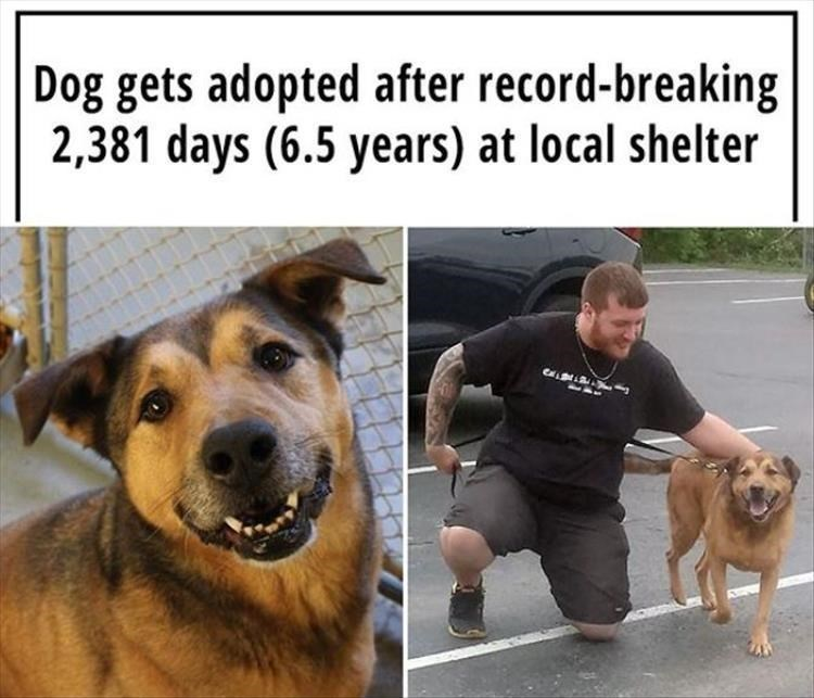 Dog - Dog gets adopted after record-breaking 2,381 days (6.5 years) at local shelter