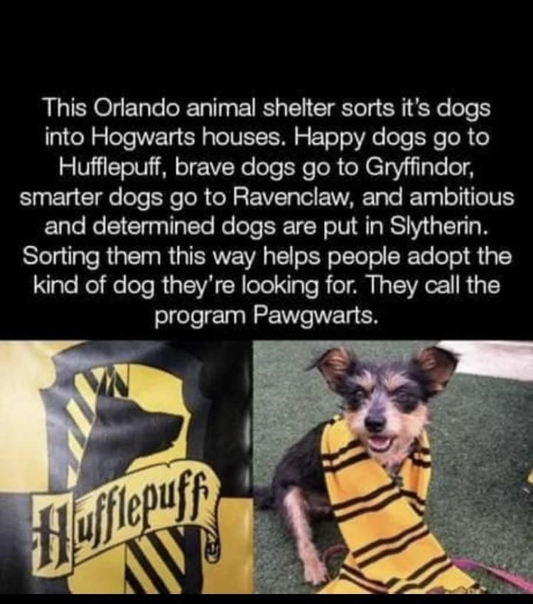 Dog - This Orlando animal shelter sorts it's dogs into Hogwarts houses. Happy dogs go to Hufflepuff, brave dogs go to Gryffindor, smarter dogs go to Ravenclaw, and ambitious and determined dogs are put in Slytherin. Sorting them this way helps people adopt the kind of dog they're looking for. They call the program Pawgwarts. flepuff