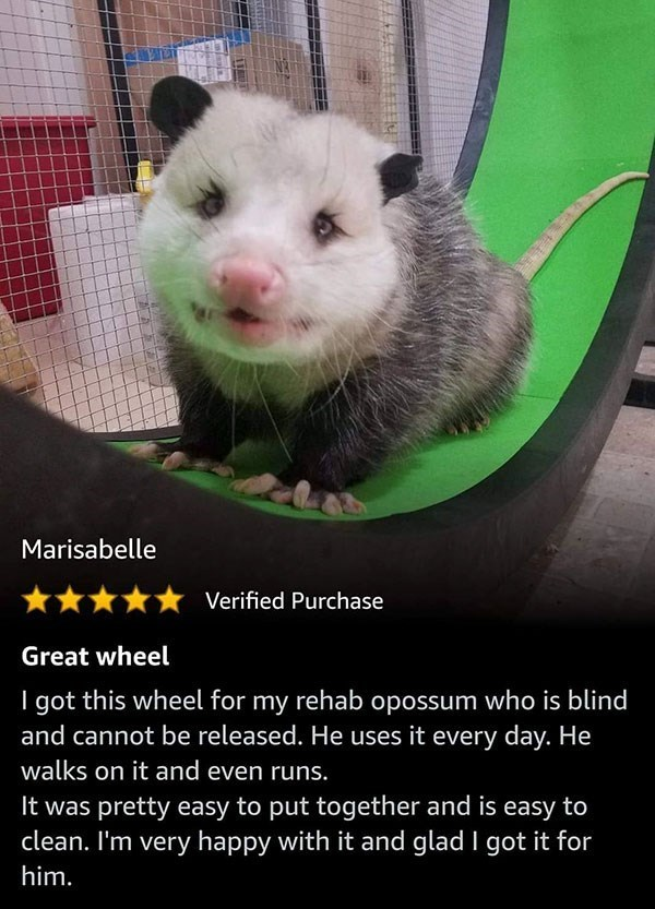 Mammal - Marisabelle Verified Purchase Great wheel I got this wheel for my rehab opossum who is blind and cannot be released. He uses it every day. He walks on it and even runs. It was pretty easy to put together and is easy to clean. I'm very happy with it and glad I got it for him.