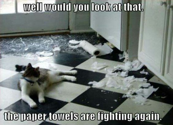 Cat - well would you look at that. the paper towels are fighting again.