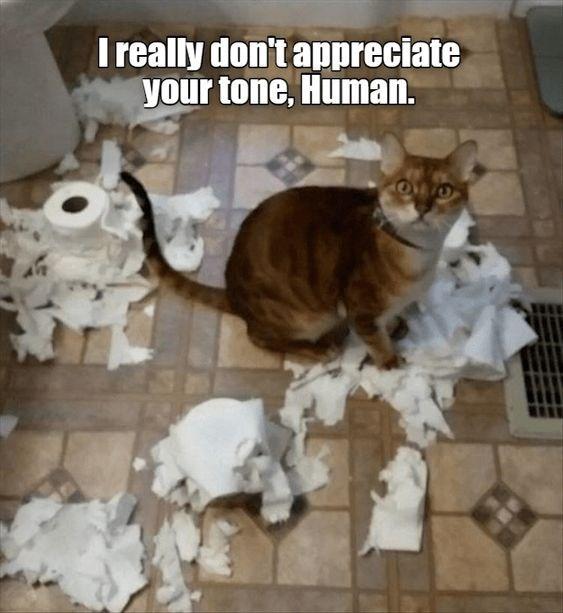 Cat - I really don't appreciate your tone, Human.