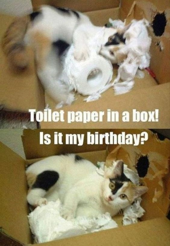 Canidae - Toilet paper in a box! Is it my birthday?