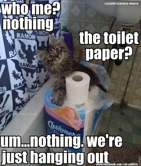 Internet meme - who me? nothing cataddictsanony-mouse ONE AMON RAMON the toilet paper? RA RAMON ES RA ONE NES RA ddcanonymouse Cashmer um.nothing, we're just hanging out www.facebook.com/cat.addicts ROFLBOT