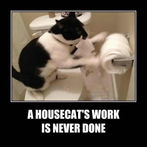 Photo caption - A HOUSECAT'S WORK IS NEVER DONE