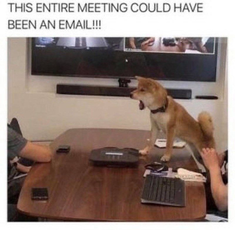 Text - Dog - THIS ENTIRE MEETING COULD HAVE BEEN AN EMAIL!!