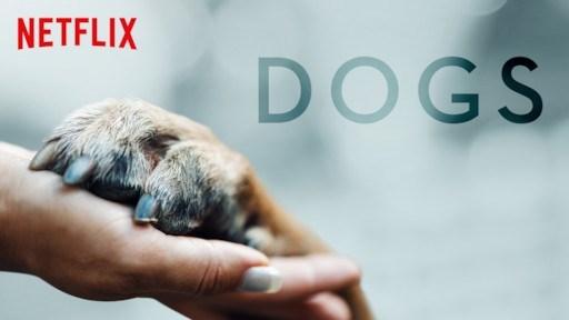 Puppy - NETFLIX DOGS