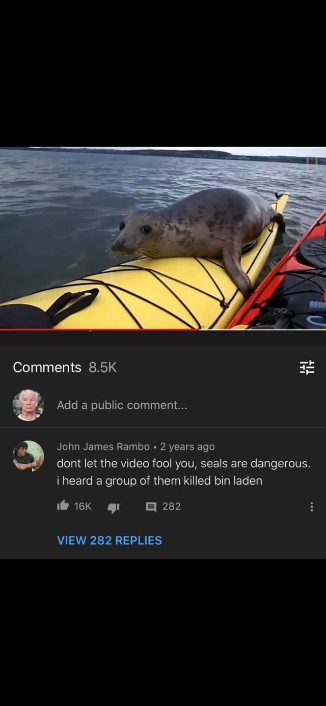 Rat - Comments 8.5K Add a public comment... John James Rambo • 2 years ago dont let the video fool you, seals are dangerous. i heard a group of them killed bin laden t 16K 目282 VIEW 282 REPLIES ...