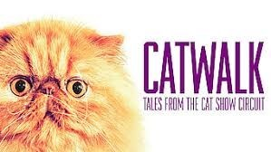 Cat - CATWALK TALES FROM THE CAT SHOW CIRCUIT