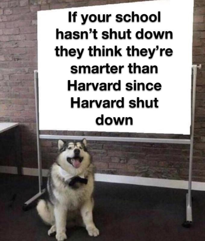 Dog - If your school hasn't shut down they think they're smarter than Harvard since Harvard shut down