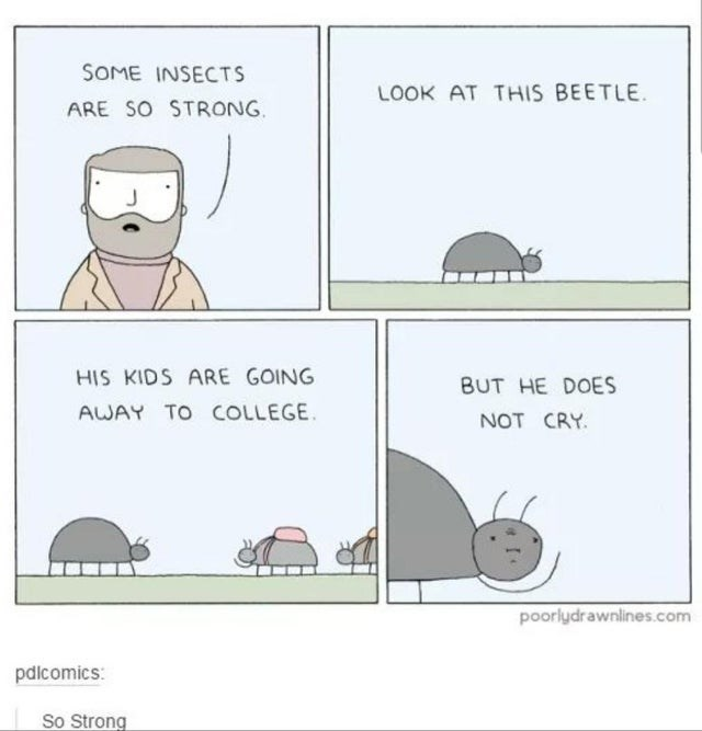 Text - SOME INSECTS LOOK AT THIS BEETLE. ARE SO STRONG. HIS KIDS ARE GOING BUT HE DOES AWAY TO COLLEGE. NOT CRY. poorlydrawnlines.com pdlcomics: So Strong