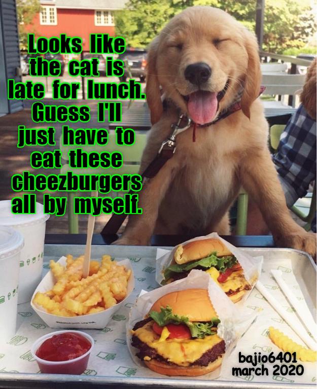 Cheezburger Image 9457545472