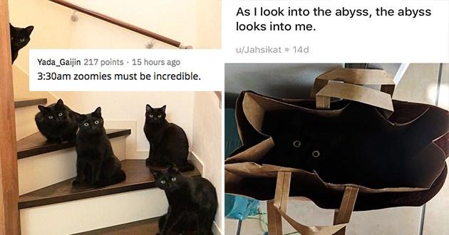 halloween black cats spooktober