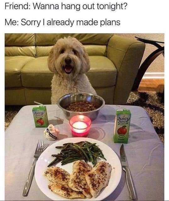 Dog - Friend: Wanna hang out tonight? Me: Sorry I already made plans Juicy Juicy