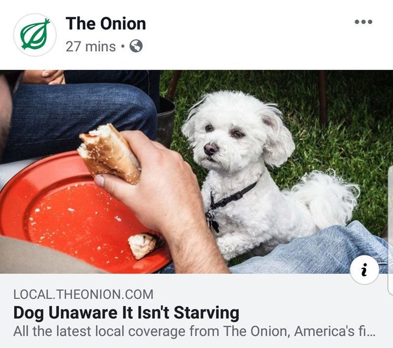 Dog breed - The Onion 27 mins • O LOCAL.THEONION.COM Dog Unaware It Isn't Starving All the latest local coverage from The Onion, America's f...