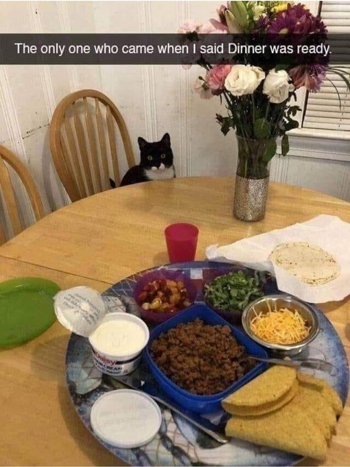 Meal - The only one who came when I said Dinner was ready.
