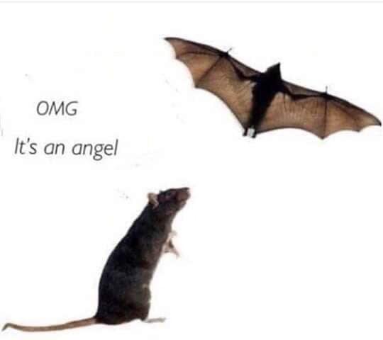 Bat - OMG It's an angel