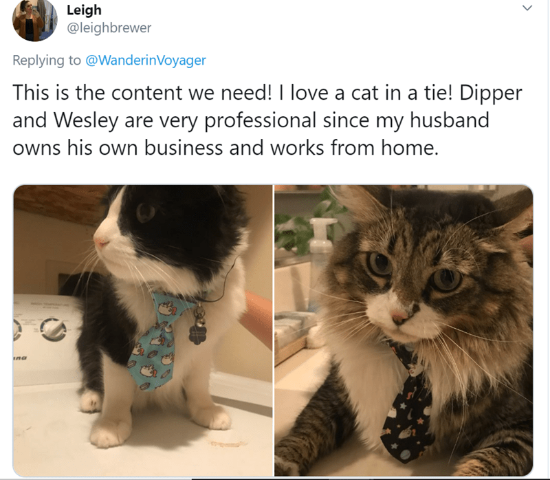 Cat - Leigh @leighbrewer Replying to @WanderinVoyager This is the content we need! I love a cat in a tie! Dipper and Wesley are very professional since my husband owns his own business and works from home. ina