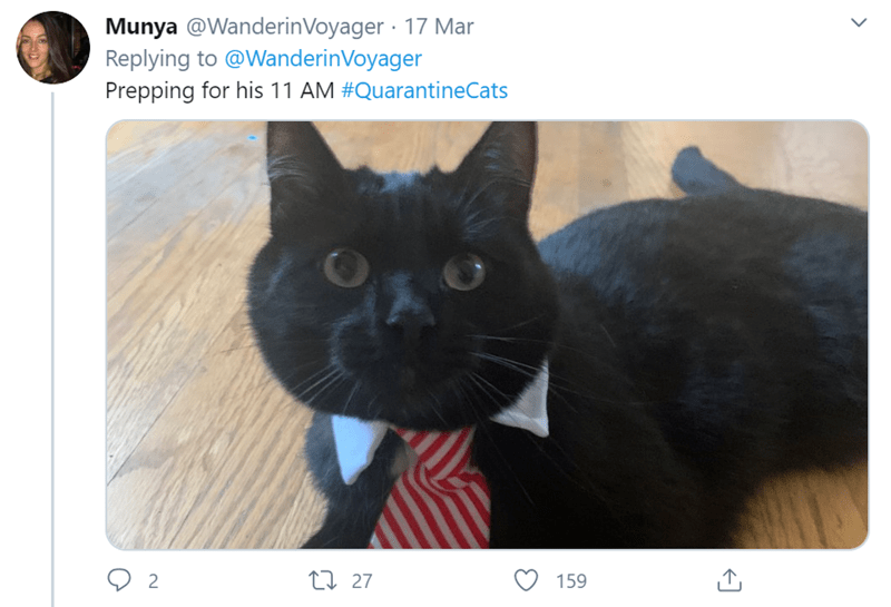 Cat - Munya @WanderinVoyager · 17 Mar Replying to @WanderinVoyager Prepping for his 11 AM #QuarantineCats 27 27 159