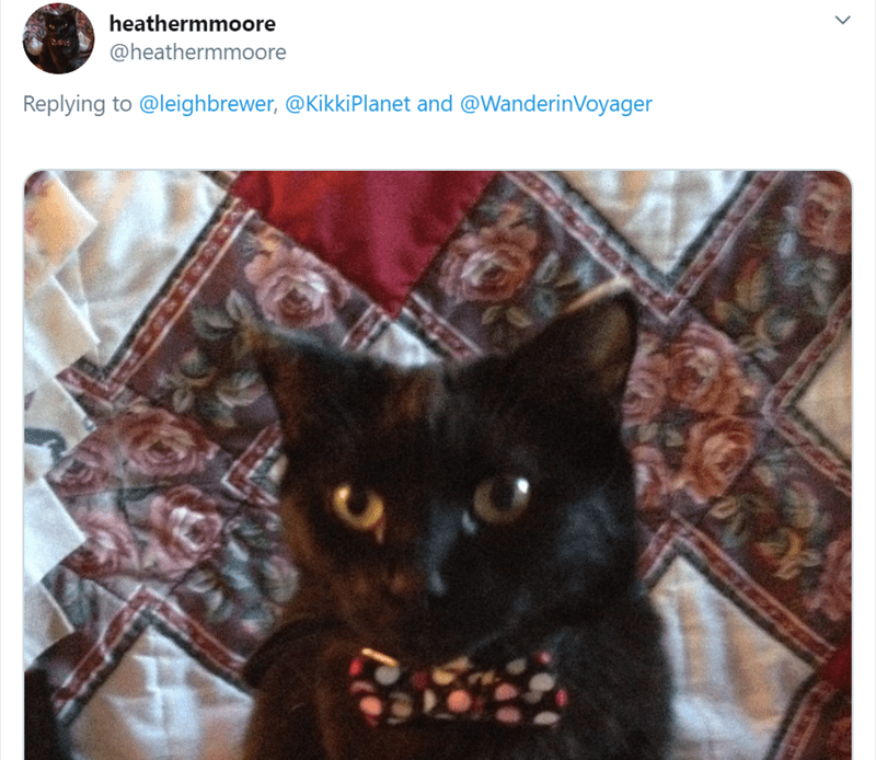 Cat - heathermmoore @heathermmoore Replying to @leighbrewer, @KikkiPlanet and @WanderinVoyager