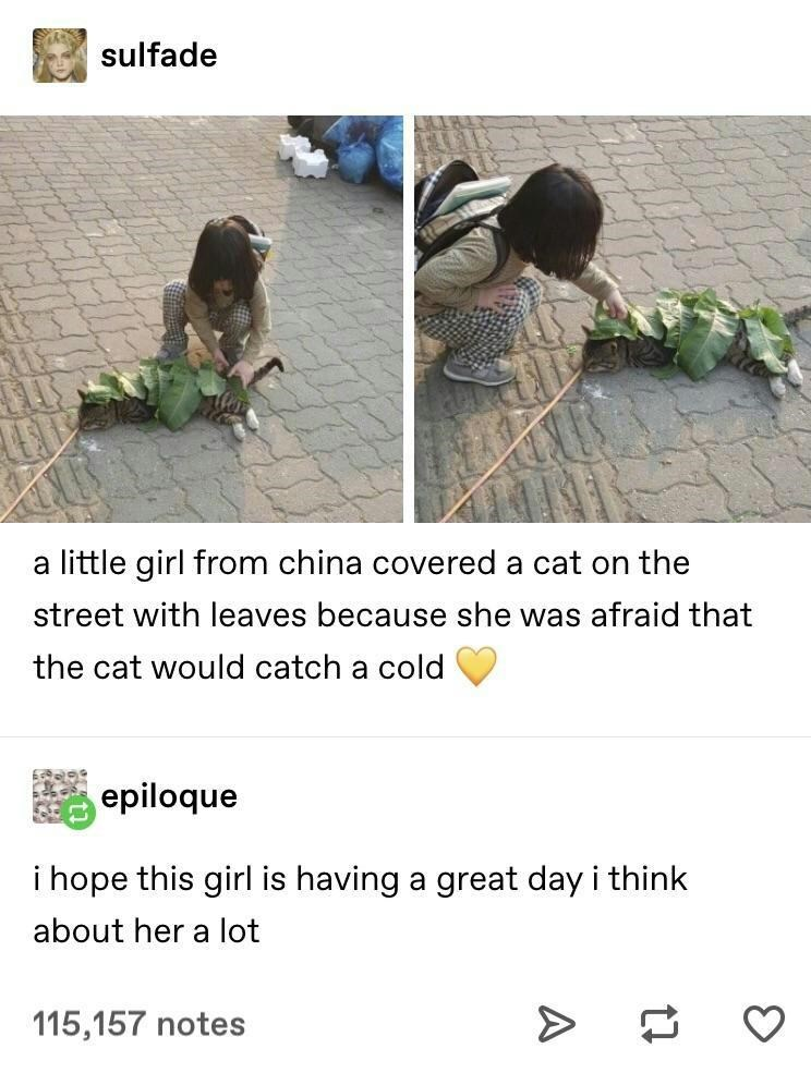 Text - sulfade a little girl from china covered a cat on the street with leaves because she was afraid that the cat would catch a cold epiloque i hope this girl is having a great day i think about her a lot 115,157 notes