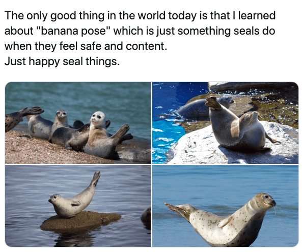 """California sea lion - The only good thing in the world today is that I learned about """"banana pose"""" which is just something seals do when they feel safe and content. Just happy seal things."""