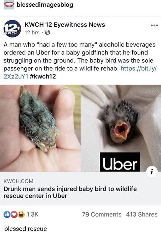 """Organism - blessedimagesblog 12 KWCH 12 Eyewitness News KWCH 12 hrs · A man who """"had a few too many"""" alcoholic beverages ordered an Uber for a baby goldfinch that he found struggling on the ground. The baby bird was the sole passenger on the ride to a wildlife rehab. https://bit.ly/ 2Xz2uY1 #kwch12 Uber KWCH.COM Drunk man sends injured baby bird to wildlife rescue center in Uber 1.3K 79 Comments 413 Shares blessed rescue"""