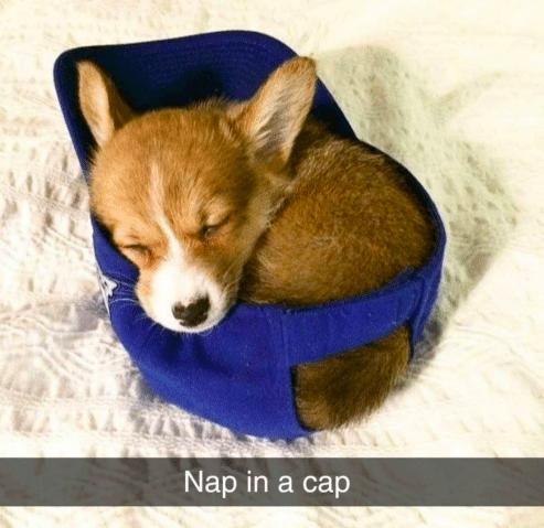 Mammal - Nap in a cap