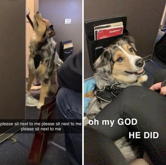 Dog - Southwer please sit next to me please sit next to me oh my GOD please sit next to me HE DID