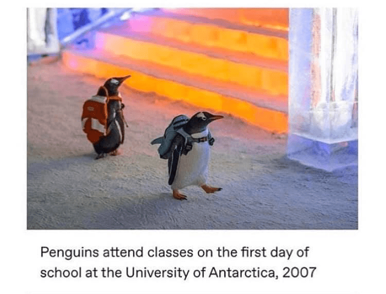 Flightless bird - Penguins attend classes on the first day of school at the University of Antarctica, 2007
