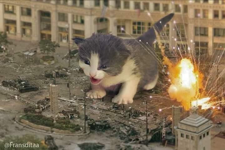 Cat - EE @Fransditaa