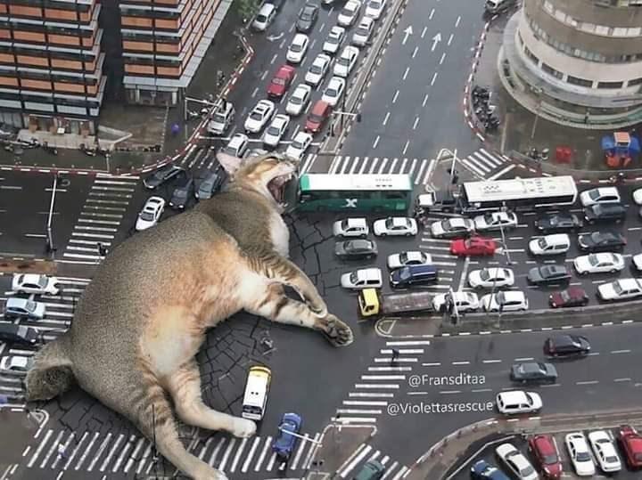 Traffic - @Fransditaa @Violettasrescue