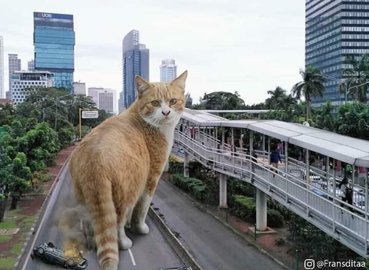 Cat - UOB O @Fransditaa ПТ