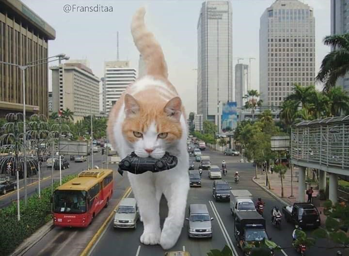 Cat - @Fransditaa