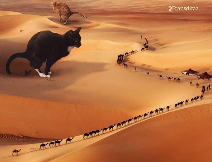 Desert - @Fransditaa