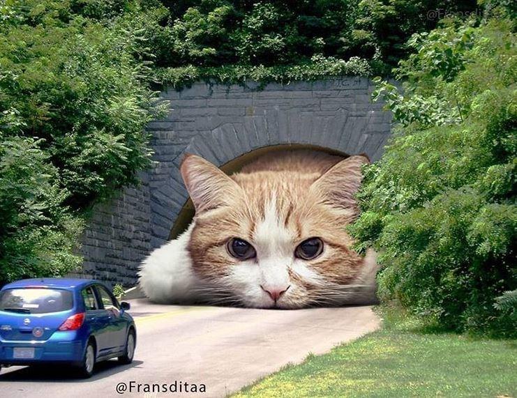 Cat - @Faseli @Fransditaa